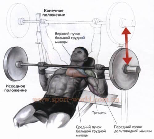 Внутренние части грудных мышц в домашних условиях